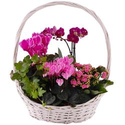 Kompozycja roślin kwitnących