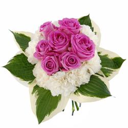 Kwiaty gwiazda wśród róż