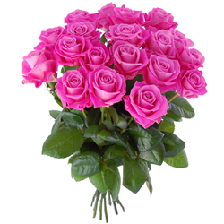 Różowe róże Kwiaty